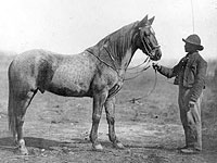 Man holding Captain Beckwith's Horse, Headquarters Army of Potomac, Feb. 1863