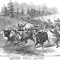 Black Troops, Driving Government Cattle
